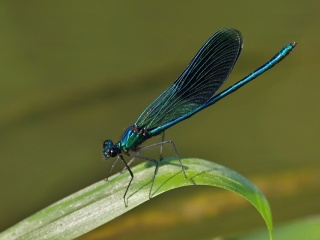 Motýlice lesklá, Příštpo, řeka Rokytná