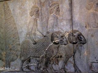 Perseopolis, reliéf ovcí u schodiště do paláce Apadana