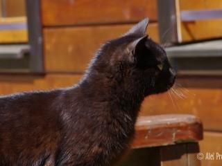 Kočka na Žiarskej chate