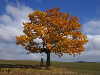 Strom u Svatoslavi