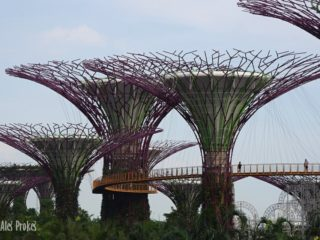 Super stromy v Gardens by the Bay