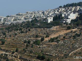 Krajina v Palestině (U Betléma)